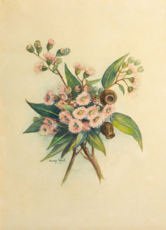 Daisy Wood, Flowering Gum, watercolour, mid 20th century -106