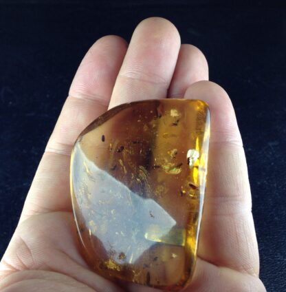 Copal with insects, like Amber, up to 1 million years old-6451