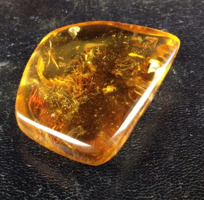 Copal with insects, like Amber, up to 1 million years old-6455