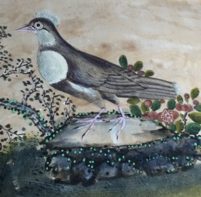 Chinese rice paper painting, a dove, early 19th century -11077