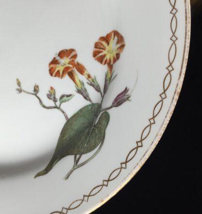 Wedgwood bone china plate, botanical specimens, C.1815 -12872