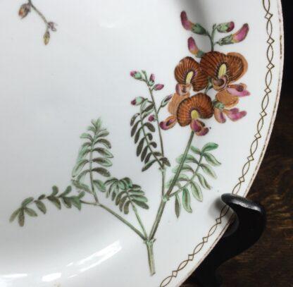 Wedgwood bone china plate, botanical specimens, C.1815 -12873