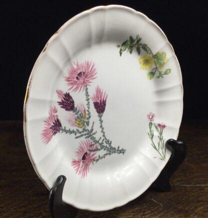 Wedgwood bone china plate, flower specimen prints, C. 1815 -12894