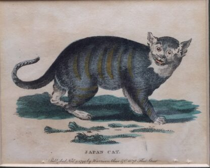 """Coloured print of """"JAPAN CAT"""", published 1799-14730"""