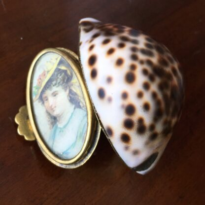 Tiger Cowrie Shell snuffbox with brass mounts & picture frame, 19th century-0