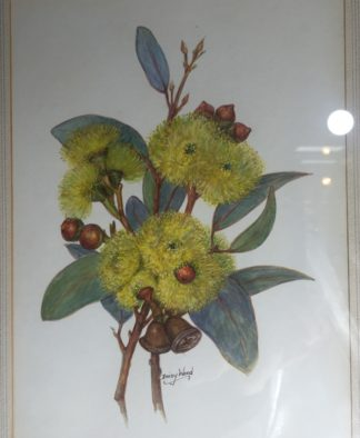Original Daisy Wood watercolour yellow gum blossom, mid 20th century-0