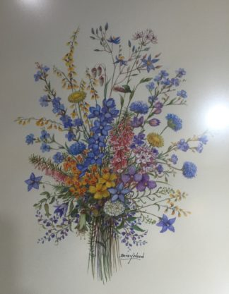 Original Daisy Wood watercolour, Australian Wildflowers, mid 20th c.-0