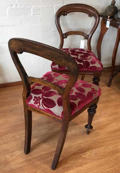 Pair of Australian cedar chairs, 19th century.-21215