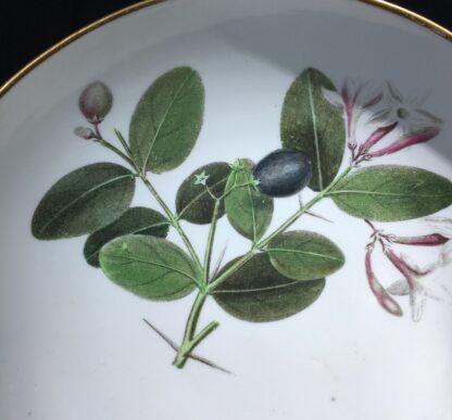 Wedgwood bone china plate, pattern 492, botanical specimens, c. 1815-22338