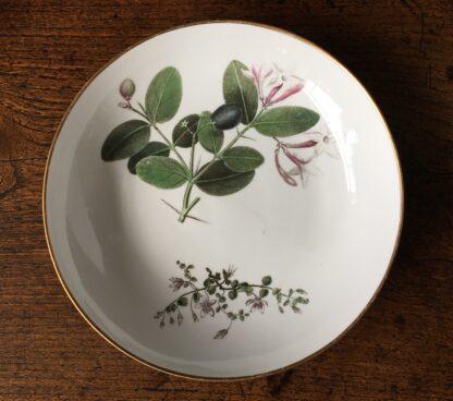 Wedgwood bone china plate, pattern 492, botanical specimens, c. 1815-25245