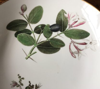 Wedgwood bone china plate, pattern 492, botanical specimens, c. 1815-25244