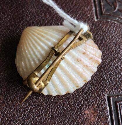 Tassy 'Brooch Shell' brooch with gold Map of Tasmania c.1900-31148